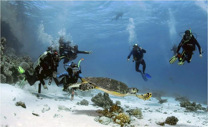 Дайвинг в Красном море