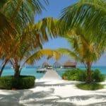 пальмы на побережье Мальдивы