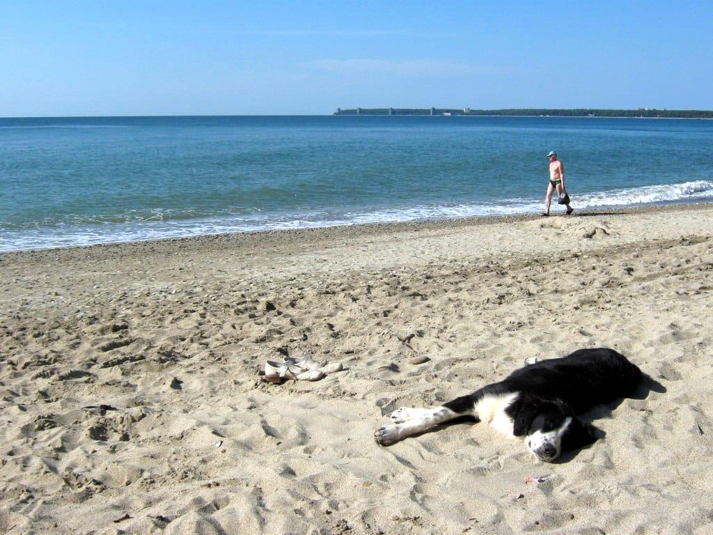 Песчаный пляж в Пицунде
