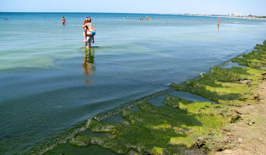 водоросли на берегу лечебного пляжа в Анапе
