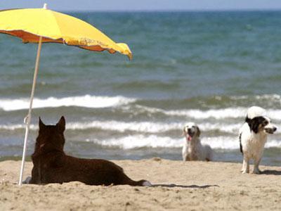 Пляжи для собак в Италии