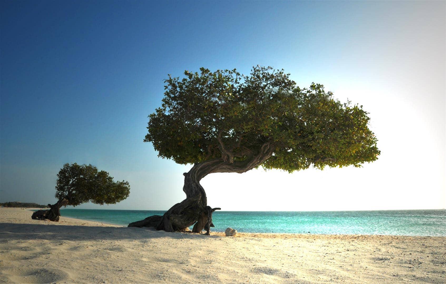 Песок на Арубе