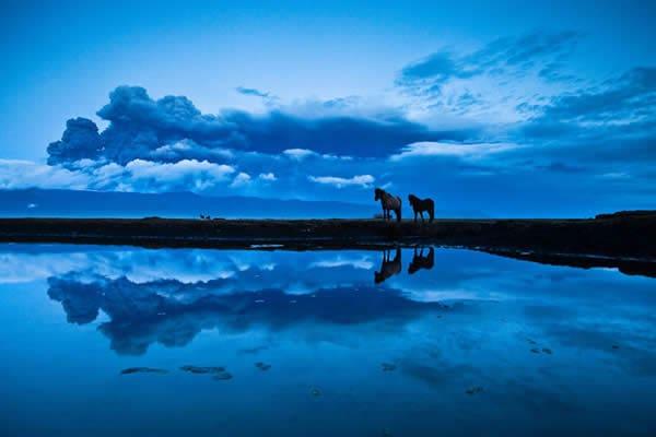 Кони с голубыми глазами в Исландии