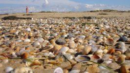 Лучшие пляжи Витязево