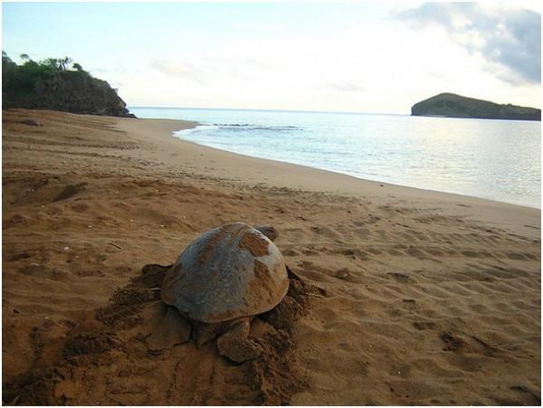 Пляжи острова Лама