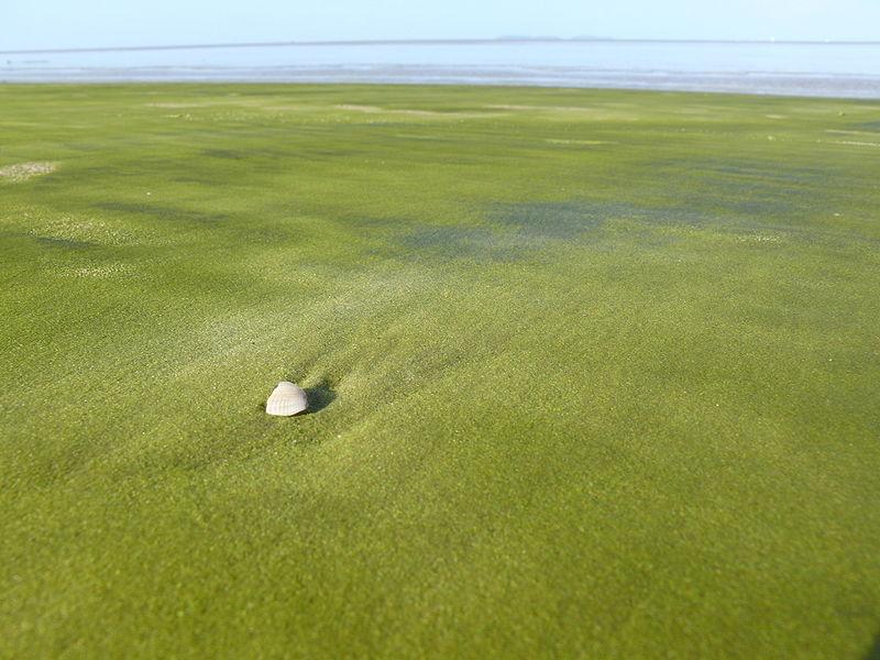 Пляж Папаколеа Green Sand
