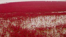 Красный пляж в Шуантай-Хэкоу