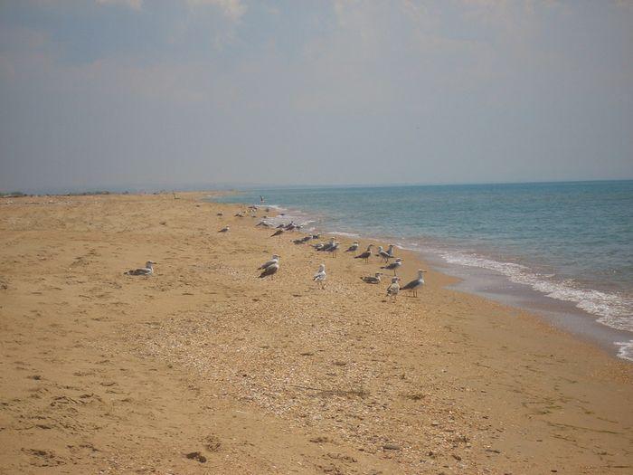 Пляжи мыса Казантип