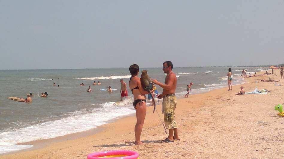 Пляж молодежный голубицкая фото и отзывы