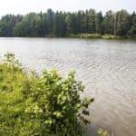 вода в пруду в Голыгино