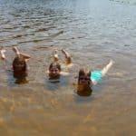 Пляж озера Змейки