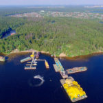 побережье Пироговского водохранилища
